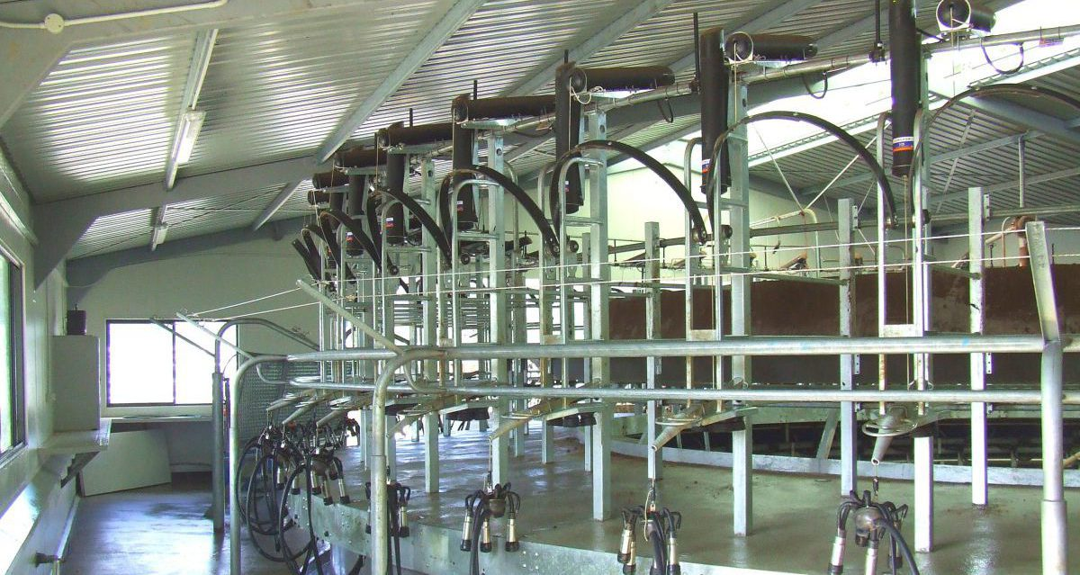 Rotary Milking Parlour